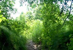 Эффективные практики очищения и избавления, место силы Лысая гора