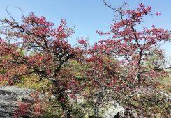 Место силы гора Тотоха осень 2019